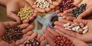 Ley de semillas: «Consagra el cobro de regalías extendidas»