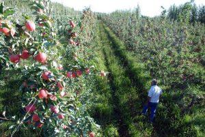 Edgard Artero: «La fruticultura no le interesa a los gobernantes»