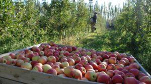 Paritarias en la fruta: Los empresarios ofrecen un aumento del 10%