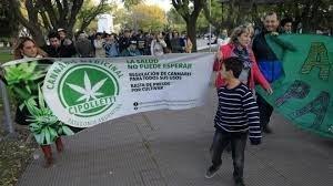 Reconocimiento a ONG para uso medicinal del cannabis