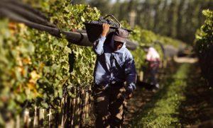 Brasil cerró la frontera para la fruta de la región