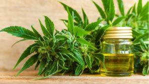 Revocan el permiso para cultivar cannabis a la familia que tiene un niño con tourette