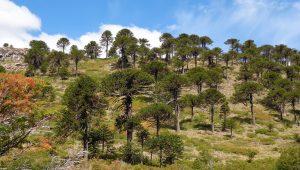 Legislatura: Alertan que el MPN quiere «apurar» la actualización en la ley de bosques