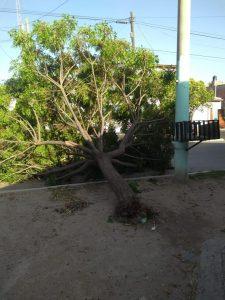 Ráfagas de viento: Hubo ocho árboles caídos en Neuquén capital