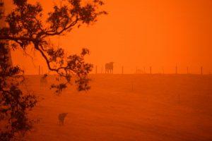 Australia arrasada