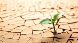 Pandemia y medio ambiente