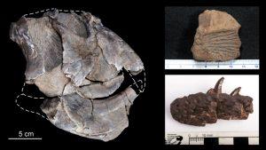 230 millones de años atrás