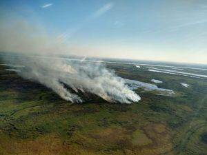 Causas y consecuencias de los incendios en los humedales del Delta