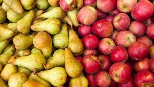 Pese a la pandemia la exportación de fruta de la región se sostuvo y aumentó