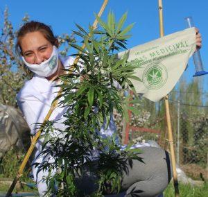 Les robaron cannabis para uso medicinal y piden acompañamiento del Estado