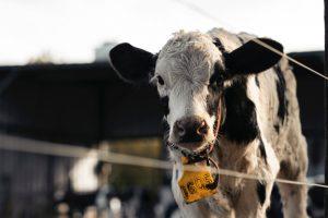 Carnes: Precio y consumo