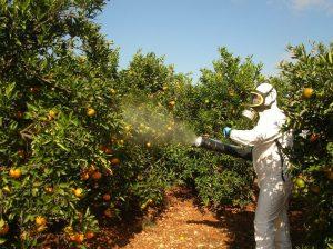 El Senasa prohibió el uso del insecticida Clorpirifos