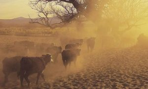 Neuquéndeclara la emergencia agropecuaria